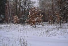 Parque del invierno en Kiev Imagen de archivo