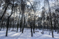Parque del invierno en Kiev Fotografía de archivo libre de regalías