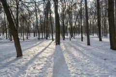 Parque del invierno en Kiev Imágenes de archivo libres de regalías