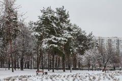 Parque del invierno en Kyiv ucrania imagen de archivo libre de regalías