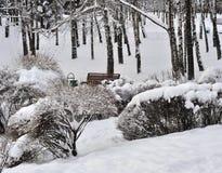 Parque del invierno en la nieve Imágenes de archivo libres de regalías