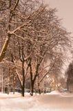 Parque del invierno en la opinión de la vertical de la noche Cielo gris Fotos de archivo