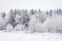 Parque del invierno en Minsk, Bielorrusia Fotos de archivo