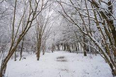 Parque del invierno en Minsk, Bielorrusia Foto de archivo libre de regalías