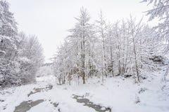 Parque del invierno en Minsk, Bielorrusia Imagen de archivo libre de regalías