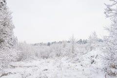 Parque del invierno en Minsk, Bielorrusia Imágenes de archivo libres de regalías