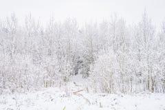 Parque del invierno en Minsk, Bielorrusia Fotografía de archivo