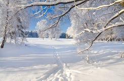 Parque del invierno en nieve Fotografía de archivo libre de regalías