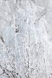 Parque del invierno en nieve Imágenes de archivo libres de regalías