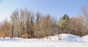 Parque del invierno en nieve Imagen de archivo libre de regalías