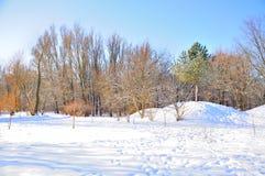 Parque del invierno en nieve Fotografía de archivo