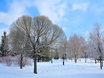Parque del invierno en nieve Foto de archivo libre de regalías