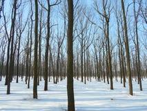 Parque del invierno Nevado con los árboles con las hojas caidas Foto de archivo libre de regalías