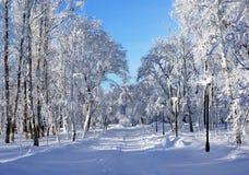 Parque del invierno, paisaje Fotos de archivo