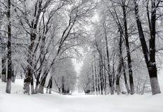 Parque del invierno, paisaje Fotos de archivo libres de regalías
