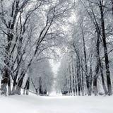 Parque del invierno, paisaje Fotografía de archivo
