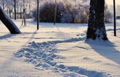 Parque del invierno, paisaje del invierno Fotos de archivo libres de regalías
