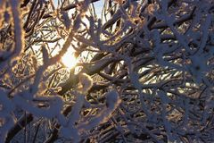 Parque del invierno, paisaje del invierno Imagenes de archivo