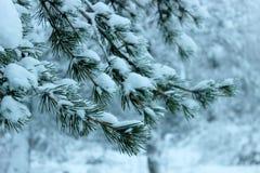 Parque del invierno, paisaje del invierno Foto de archivo libre de regalías