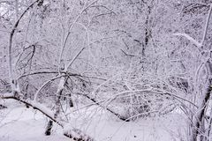Parque del invierno ulyanovsk imagen de archivo libre de regalías