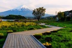 Parque del jardín de Oishi con el Mt Fuji en la oscuridad imagen de archivo libre de regalías