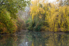 Parque del lago en otoño Fotografía de archivo