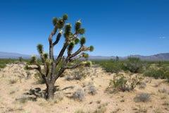 Parque del Mojave Imágenes de archivo libres de regalías