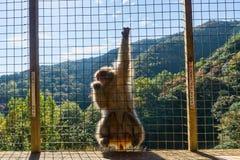 Parque del mono de Iwatayama Imagen de archivo libre de regalías
