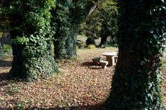 Parque del otoño, árboles viejos y sentada de piedra imagen de archivo libre de regalías