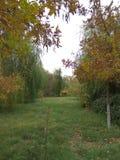 Parque del otoño Imagen de archivo libre de regalías