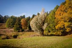 Parque del otoño Fotografía de archivo libre de regalías