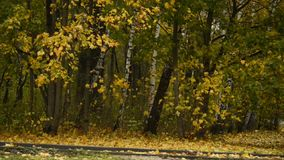 Parque del otoño bajo la lluvia Humor melancólico almacen de metraje de vídeo