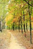 Parque del otoño con los árboles amarillos Fotos de archivo libres de regalías