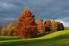 Parque del otoño con metasequoia Fotografía de archivo libre de regalías