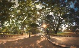 Parque del otoño de la caída Imagen de archivo