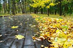 Parque del otoño del callejón Imagen de archivo