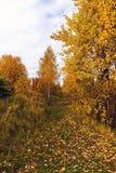 Parque del otoño en día nublado en Rusia Fotografía de archivo libre de regalías