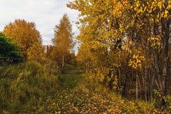 Parque del otoño en día nublado en Rusia Fotografía de archivo