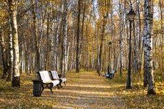 Parque del otoño en el día soleado, Imagen de archivo