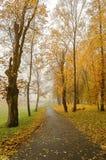 Parque del otoño en la niebla Imagen de archivo libre de regalías