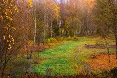 Parque del otoño en Ucrania Foto de archivo