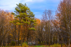 Parque del otoño en Ucrania Fotografía de archivo