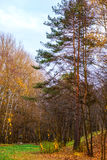Parque del otoño en Ucrania Imagenes de archivo