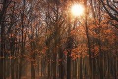 Parque del otoño en un día caliente del otoño imágenes de archivo libres de regalías