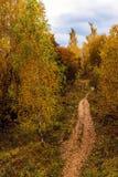 Parque del otoño en un día nublado en Rusia Foto de archivo