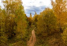 Parque del otoño en un día nublado en Rusia Imagenes de archivo