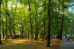 Parque del otoño en un día soleado imagenes de archivo