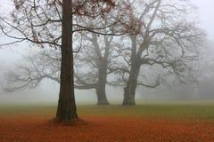 Parque del otoño en una niebla Foto de archivo