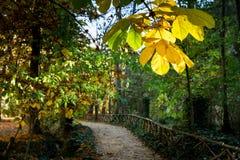 Parque del otoño, hojas del amarillo Foto de archivo
