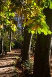 Parque del otoño, hojas del amarillo Imagenes de archivo